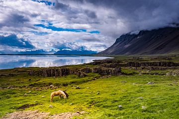 IJslanders van Edwin van Wijk
