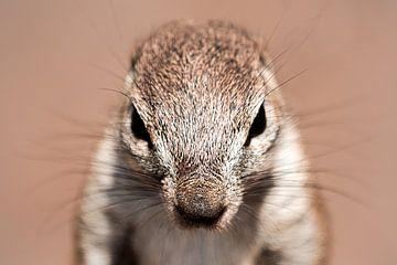 Squirrel van Thomas Froemmel