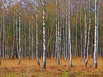 Birkenwald (Birkenstämme im Wald) von Caroline Lichthart
