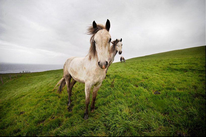 Wild horses van Eelko Lommers