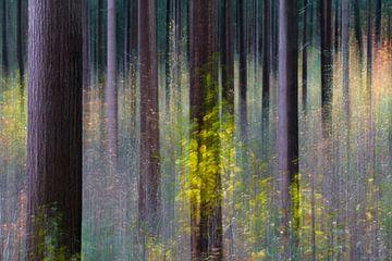 Lijnen en kleuren van Ronald van Dijk