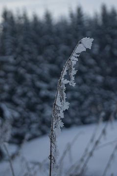 Uitgesneeuwende mist op graan van Andrea Ooms