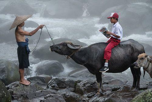 Naar school op een waterbuffel