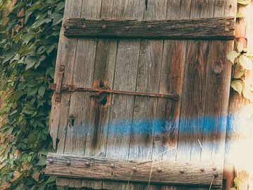 Detail 4 van Miriam Meijer, en plein campagne.....