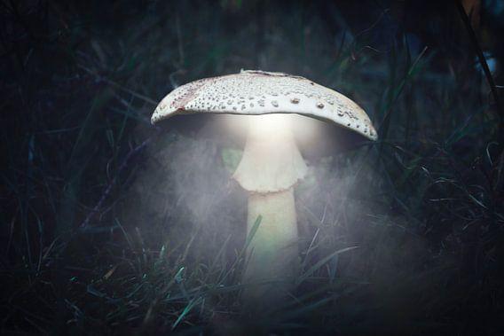 Autumn 2018 Magical Mushrooms van Angelo van der Klift