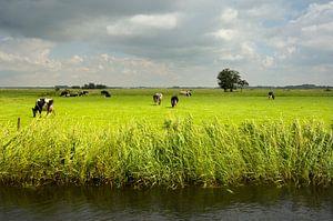 Veen- en Veldendijkpad van Willem van Leuveren Fotografie