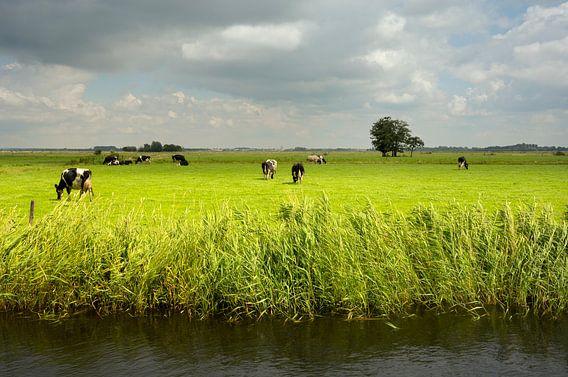 Veen- en Veldendijkpad
