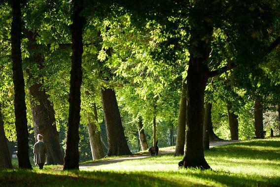 Zocherpark in Utrecht er hoogte van Maliesingel