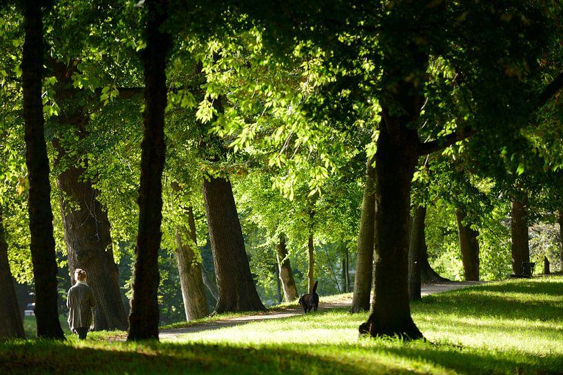 Zocherpark in Utrecht er hoogte van Maliesingel van In Utrecht