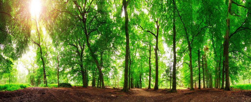 Zomers bos panorama van Dennis van de Water
