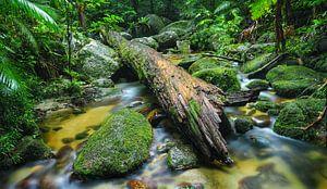 Mossman-Schlucht, Far North Queensland - Australien von Van Oostrum Photography