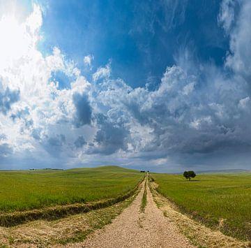Landweg met één boom van