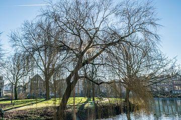 Prachtige boom in winter in Hoorn von Eric de Kuijper