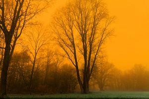 Nebliger Sonnenaufgang im Wald.