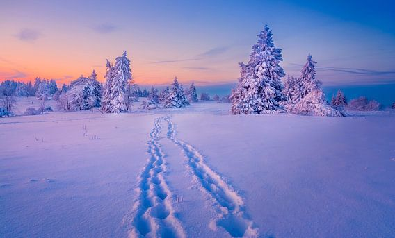 Winter Wonderland von Xander Haenen