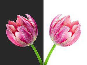 Tweeluik - Tulpenvaas van Judith Spanbroek-van den Broek