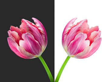 Diptychon-Tulip Vase von Judith Spanbroek-van den Broek