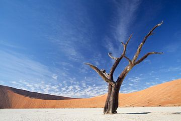 Deadvlei Namibie sur Ellen van Drunen