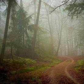 Mist en zandweg in het Speulderbos van Jenco van Zalk