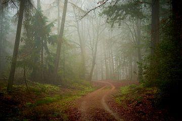 Mist en zandweg in het Speulderbos