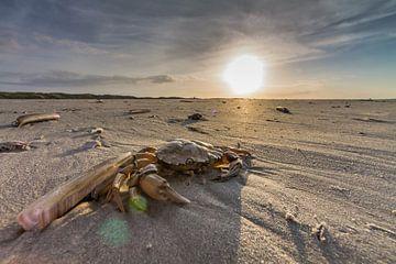 Sunset crab van Nicole Nagtegaal