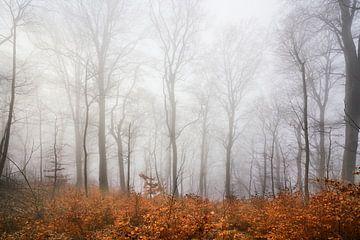 Nebelstimmung am Rosenstein van Max Schiefele