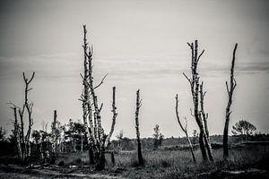Bos dood hout