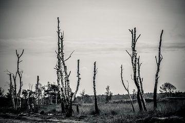 Bos dood hout van Fotografie Jeronimo