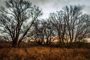 Avond met bomen aan de oever van de IJssel bij Fortmond