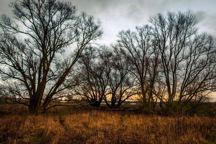 Avond met bomen aan de oever van de IJssel bij Fortmond van Henk Hulshof
