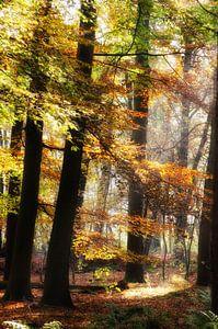 Sfeervol herfstbos