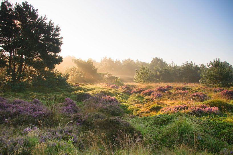 Dwingelderveld uit de mist 2 van Jan Meijer