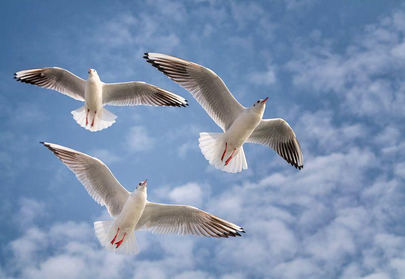 Flying High van Wad of Wonders