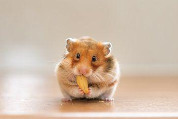 Hamster sur Yajie Wang-Campagne