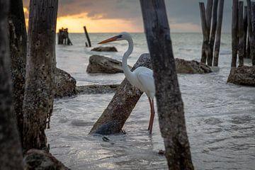 Héron dans la mer au coucher du soleil - Isla Holbox Mexique sur