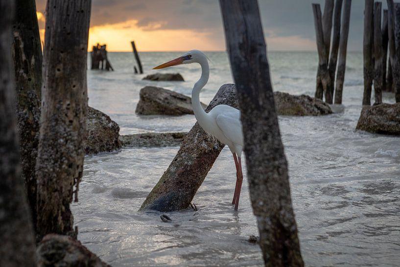 Reiger in de zee tijdens zonsondergang - Isla Holbox Mexico van Sander Hupkes