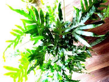 Kamerplant: Phlebodium Blue Star | Staalvaren 2-1 van MoArt (Maurice Heuts)