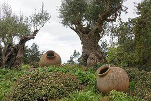 Olivenbäume und alte Vasen auf Madeira