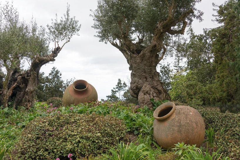 Olivenbäume und alte Vasen auf Madeira sur ChrisWillemsen