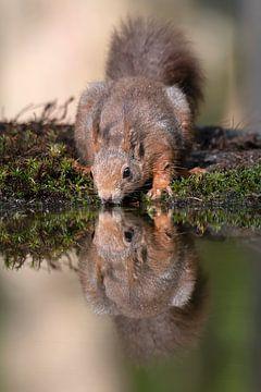 Spiegelbeeld van Joop wollendorf