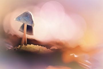 Herfst licht van Bob Daalder
