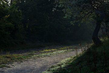 Der Waldweg von Alejandro Vivas