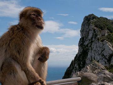 Gibraltar aapje van kees luiten