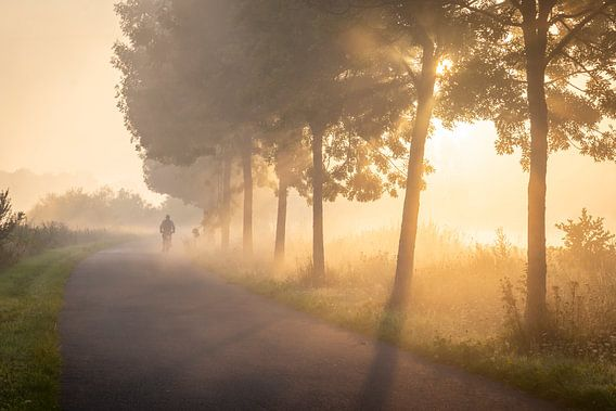 Fietser in de mist op het jaagpad langs de Leie in Lauwe - Menen, Belgie