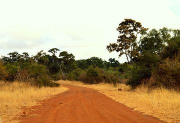 Rode weg middenin het Kruger park, Zuid Afrika van Vera Boels