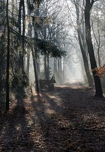 car in forest with sunbeams in winter landscape