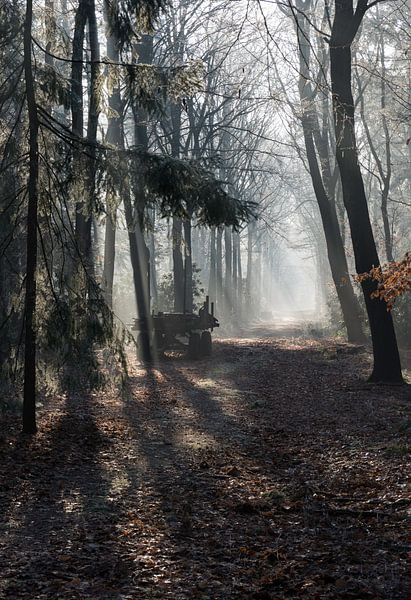 car in forest with sunbeams in winter landscape sur ChrisWillemsen