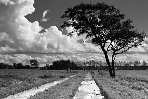 Wolken, boom en pad