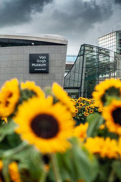Le Rijksmuseum derrière Sunflower Field sur koennemans