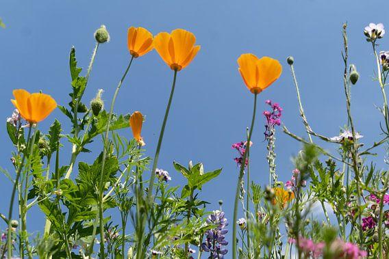 Wilde gele bloemen van Diana Kors